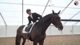 56 chevaux d'Andreas Helgstrand au départ du concours de Herning