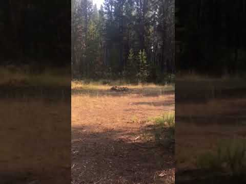 Video Of Willow Campground, OR