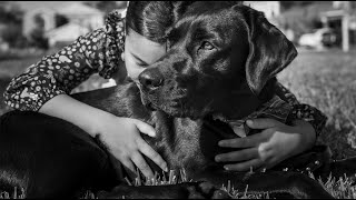 Dogs of Destiny - Taylor Made for Love | Southeastern Guide Dogs