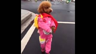 Clothes Makes The Cute Dog