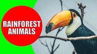 Rainforest Animals for Children – Jungle Animal Sounds and Rainforest Wildlife