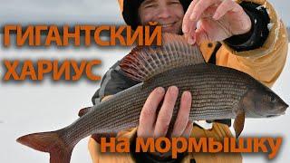 Рыбалка в карелии пяозеро дикарем 2020