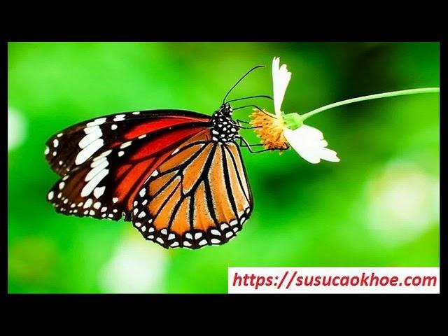 Giải mã giấc mơ thấy con bướm là điềm gì, đánh con gì, tốt hay xấu – susucaokhoe