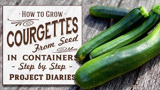 ★ How to: Grow Courgettes aka Zucchini from Seed in Containers (Step by Step Guide)