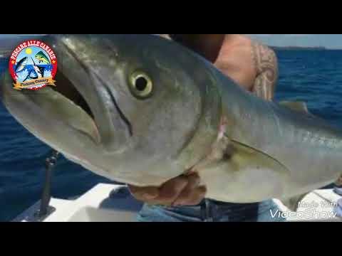 La serie radiofonica per pescare e cacciare