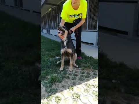 Sesso video gratis crudele