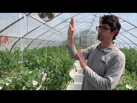 , title : 'Trellising Techniques for High Tunnel Tomatoes