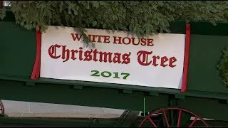 Меланья Трамп с сыном приняли рождественскую ёлку в Белом доме