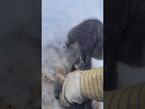Homem resgata três gatos congelados