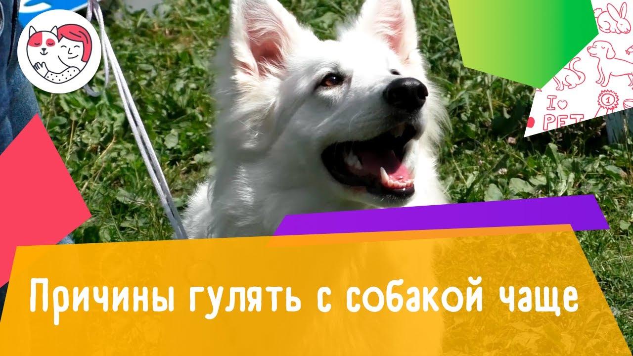 5 причин гулять с собакой чаще