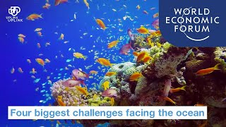 Four Biggest Challenges Facing the Ocean | World Economic Forum