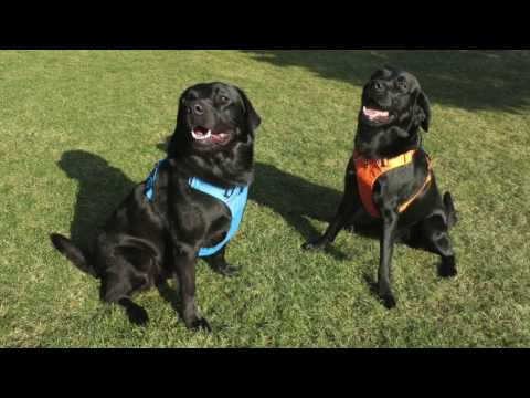 Ruffwear Front Range Harness, Hundegeschirr mit Brustring