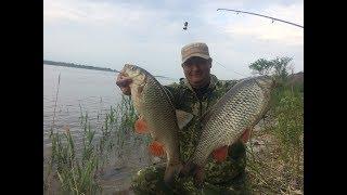 Какая рыба клюет в июне на реке волга