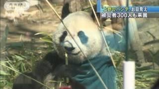 上野動物園でパンダ公開被災者300人も来園11/04/01