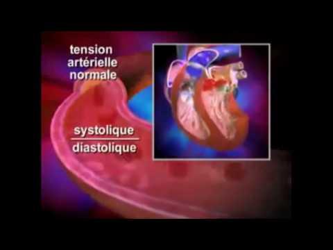 Lhypertension Skullcap
