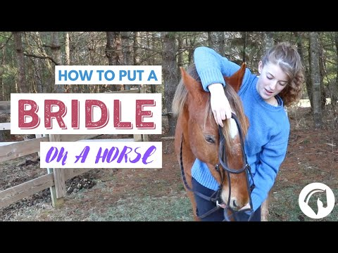 , title : 'How to Put a Bridle On a Horse (English)