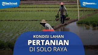 Pakar Pertanian Jelaskan Kondisi Lahan Pertanian di Solo Raya: Penyusutan Lahan Terjadi Tiap Tahun