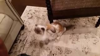 animale iepurele si pisica