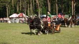 preview picture of video 'XIV Zjazd Miłośników Koni - Pajęczno 2014'
