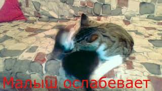 мини история котов