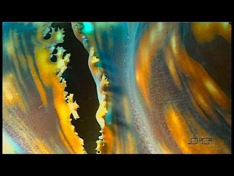 Bali, Perle des indischen Ozeans, Bali Insel Menjangan,Indonesien