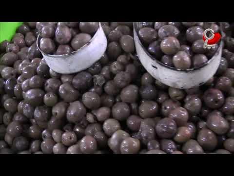 Impulsamos agricultura local con 10ª Feria de la Aceituna