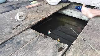 preview picture of video 'pesta ikan keting di lubang lanting danau seluluk seruyan kalteng'