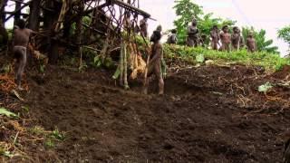Land Diving At Pentecost Island In Vanuatu