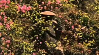 Казачья застава (1982) фильм смотреть онлайн