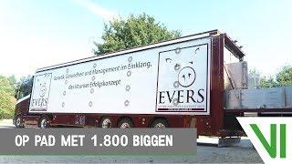 EIGEN WERK | Op pad met 1.800 biggen! | Evers & Posthouwer