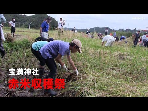 宝満神社赤米収穫祭茎南小学校児童収穫体験令和2年〜種子島の伝統行事