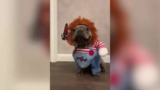 КОШКИ 2019 Смешные коты 2019 Приколы с кошками и котиками Funny Cats Выпуск 260
