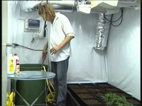 Marijuana   Top quality home growing pt 2