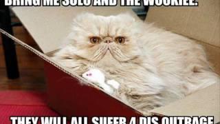 Funny Cat Pics.