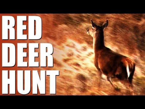 Fieldsports Britain : Stalking red deer + high-octane ratting with terriers