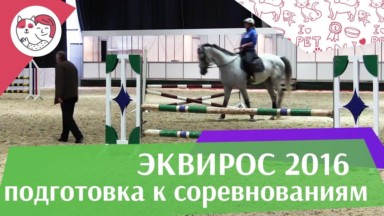 Подготовка молодой конкурной лошади к соревнованиям Ч 1 ЭКВИРОС 2016 на ilikepet