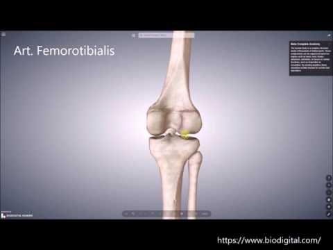 Schmerzen auf der linken Seite des Rückens während der Schwangerschaft