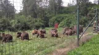 Libearty Bear Sanctuary - Zarnesti, Romania