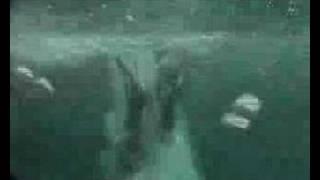 preview picture of video 'Catamaran Julia'