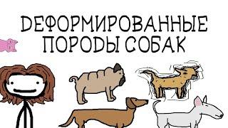 Деформированные породы собак - Академия Сэма Онеллы (Озвучка ЗВЕРЬКО)
