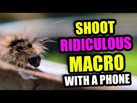 RIDICULOUS Macro Photos With your Phone