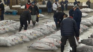 Tsukiji Fish Market Guide: Tuna Auction and Breakfast Odyssey ★ ONLY IN JAPAN