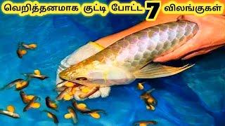 ஆச்சரியமான விலங்குகள்    Seven Unbelievable Animal Births Part 2    Tamil Galatta News