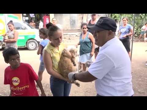 Ministerio de salud inicia jornada de vacunación canina