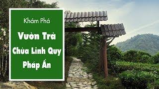 Khám Phá Vườn Trà – Nguyên Liệu Để Làm Chè Khô