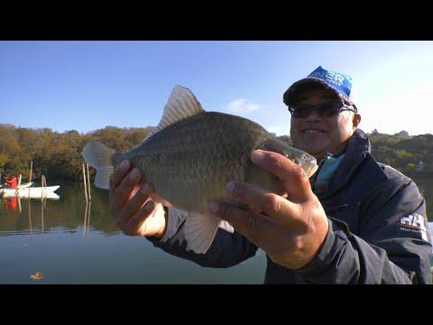 #355 ウキと語らう へら鮒釣りの深淵~一碧湖に冴え渡る名手の妙技~