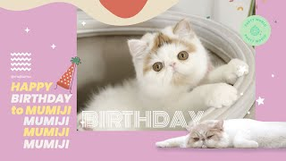 วันแรกที่เราพบกัน : Happy Birthday MUMIJI 🍁