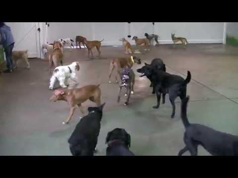 The East End Big Dogs Enjoying Their Terrific Tuesday: 12/9!