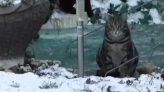 Katze Mimi –  Eishockey auf dem Gartenteich