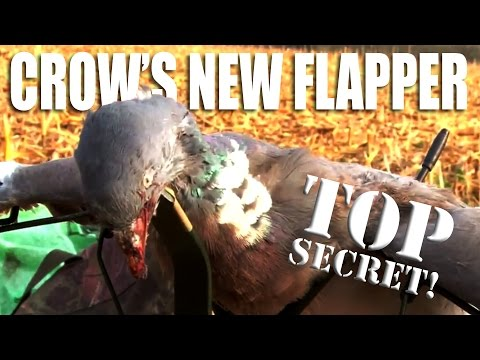 Pigeon shooting: Andy's new flapper